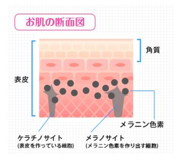 肌のターンオーバーを促す